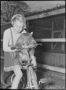 Bike with animal